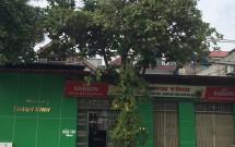 Chính chủ cho thuê nhà mặt đường QL3 Đông Hội, Đông Anh, DT 250m2 Giá 20 tr/th LH 0989371972
